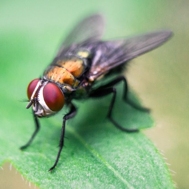 How to Get Rid of Flies: Remedies and Advice