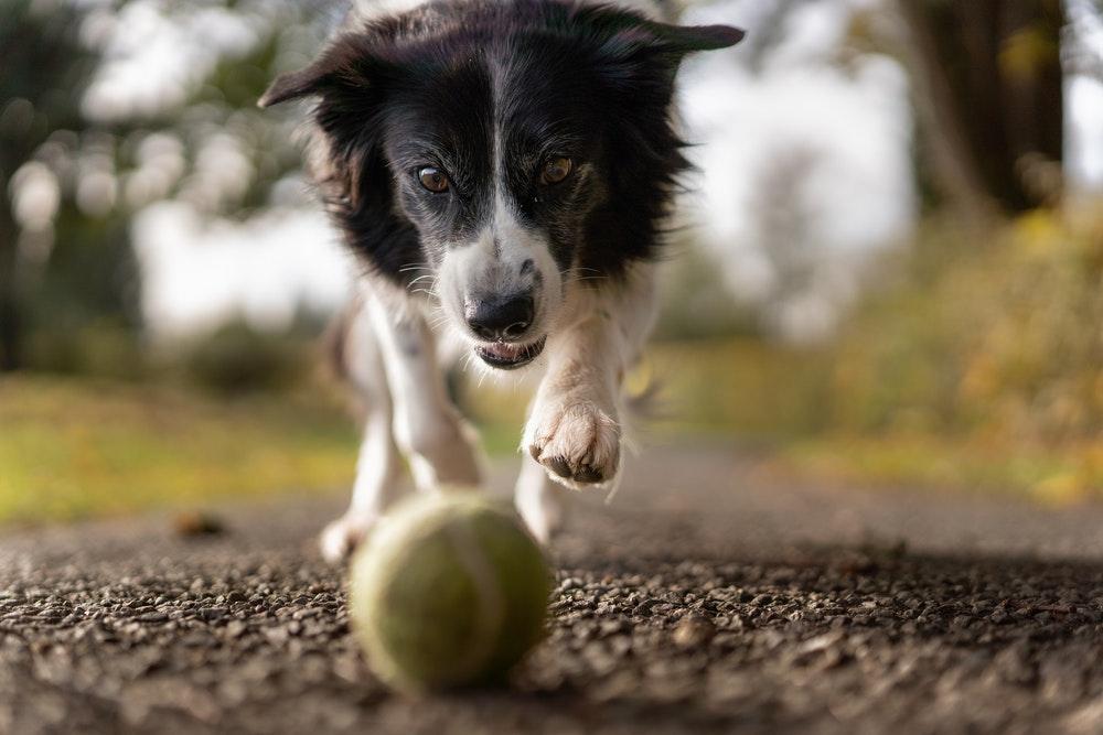 Basics Of Dog Agility Training